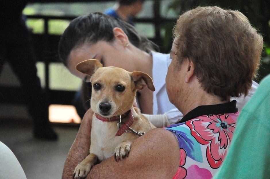 Campanha de vacinação contra raiva para cães e gatos segue em Goiânia