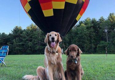 Cachorro com câncer anda em balão, toma sorvete e acampa para cumprir lista de desejos