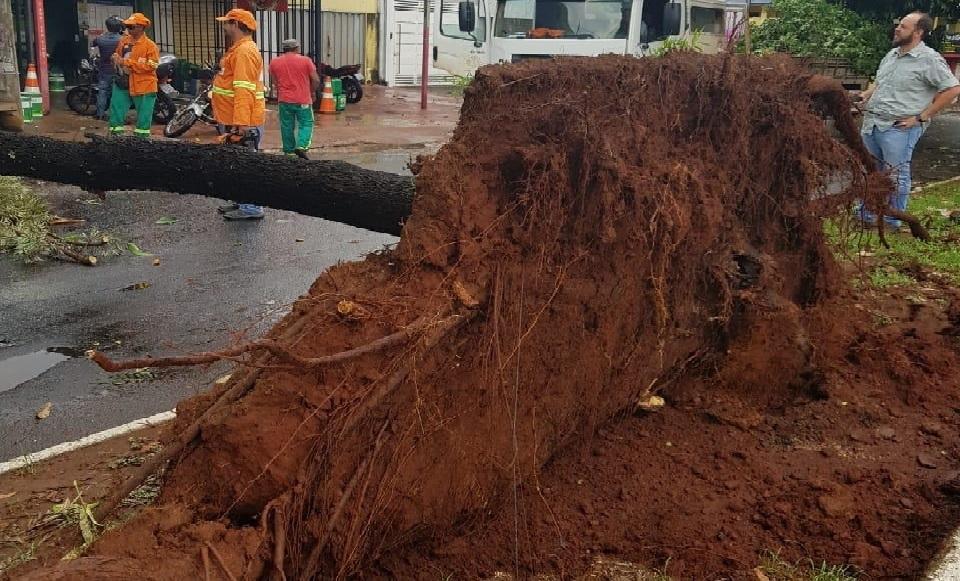 Chuva forte derruba mais de 50 árvores em Goiânia. Confira os locais