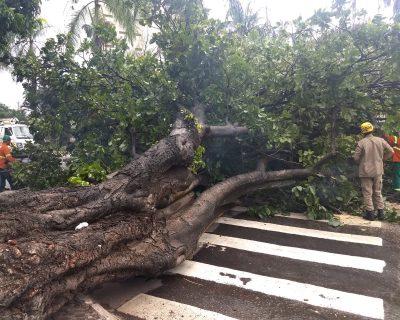 Chuva derruba árvores e ventania arranca forro de shopping em Goiânia