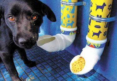Projeto de Lei prevê a implantação de comedouros e bebedouros para animais de rua em Goiânia