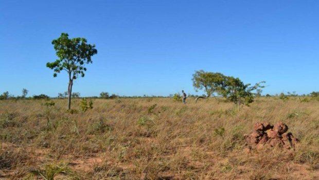 Sucesso na proteção da Amazônia encobre destruição silenciosa do Cerrado