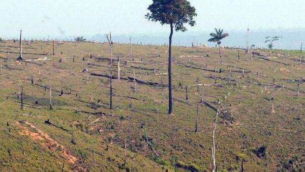 Desmatamento na Amazônia aumenta 13,7% em um ano