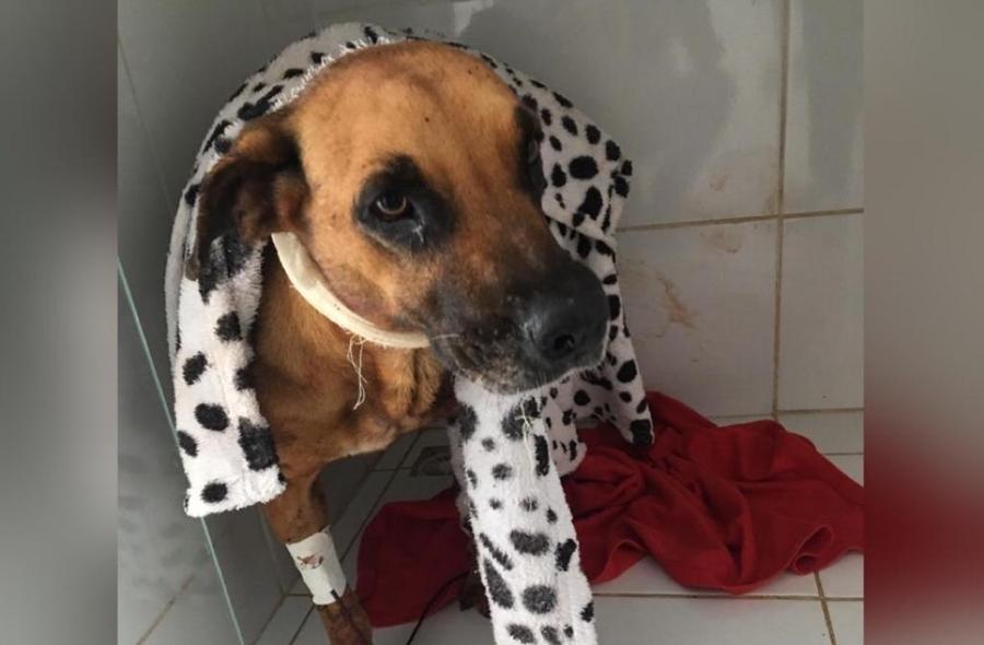 """""""Eu quero que Deus faça justiça"""", diz mulher que teve cadela agredida por vizinho"""