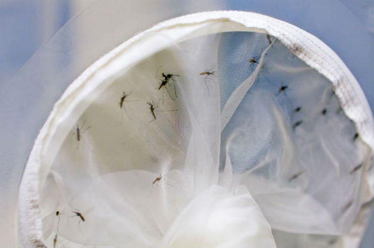 Semana Nacional de Combate ao Aedes começa domingo