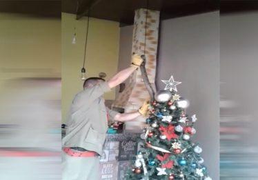 Jiboia é capturada enrolada em árvore de Natal, em Inhumas