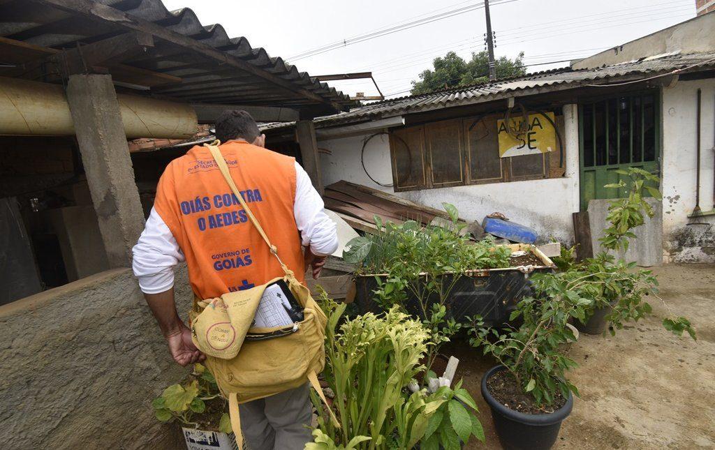 Infestação de mosquito da dengue coloca Goiás em estado de alerta