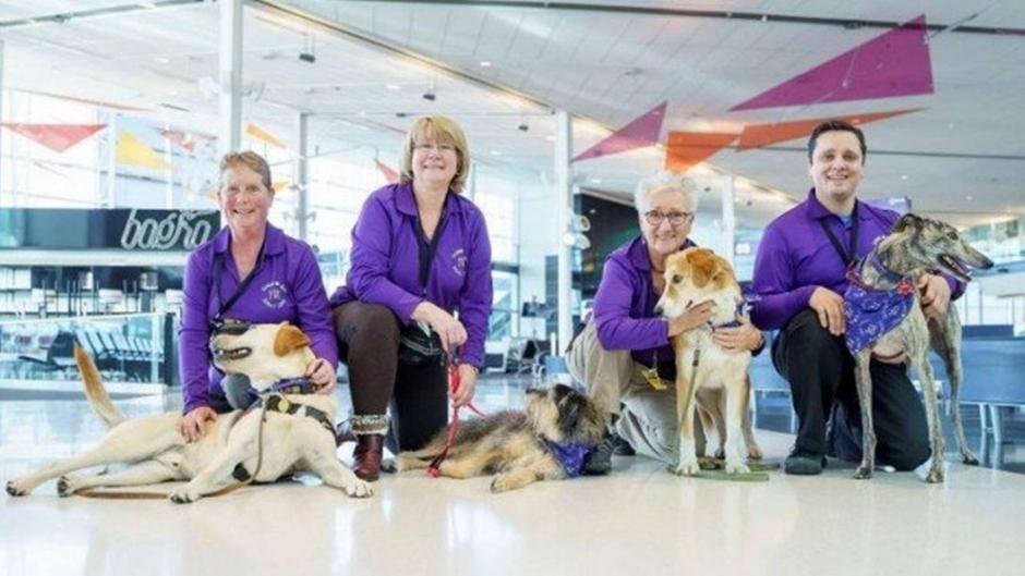 """Conheça os cães que """"trabalham"""" para desestressar passageiros em aeroporto"""
