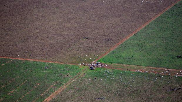 Arrendamento ilegal de terras indígenas compromete 3,1 milhões de hectares
