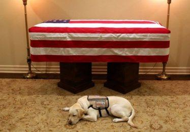 Cão de George H. W. Bush fica ao lado do caixão do ex-presidente dos EUA