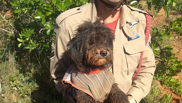 Cachorro é resgatado após cair em buraco com mais de oito metros em Cristalina