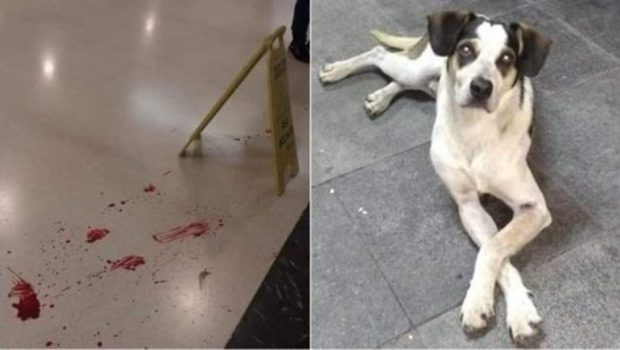 Inquérito é aberto para apurar morte de cachorro em supermercado na Grande SP