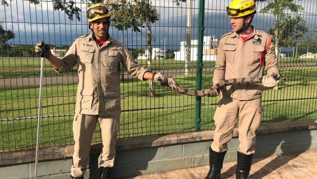 Cobra é encontrada em condomínio residencial de Anápolis