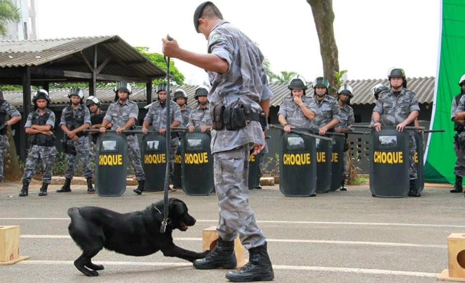 Polícia Militar vai adestrar cães de graça, em Goiânia