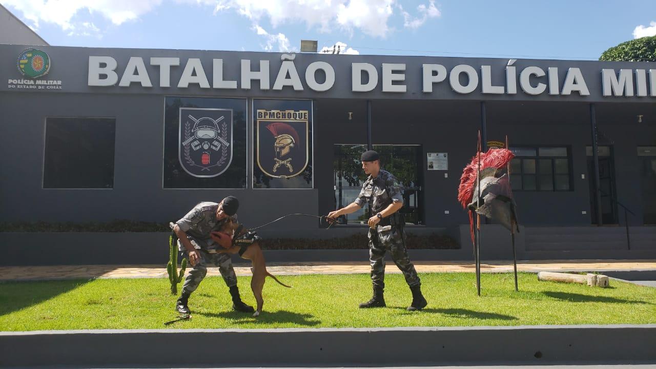 Polícia Militar vai fazer adestramento de cães gratuito para a sociedade, em Goiás, pela primeira vez (Foto: PM-GO)