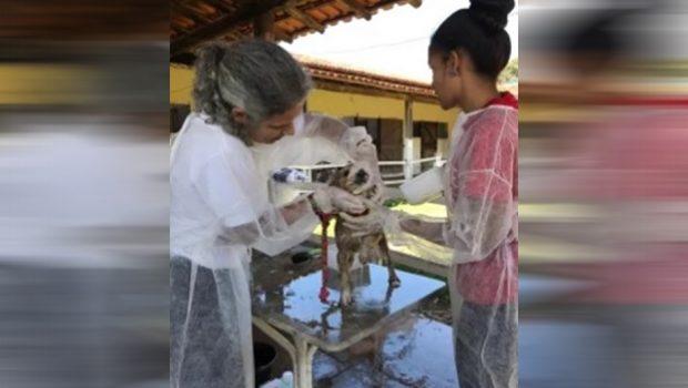 Vale monta estrutura para atender animais resgatados em Brumadinho