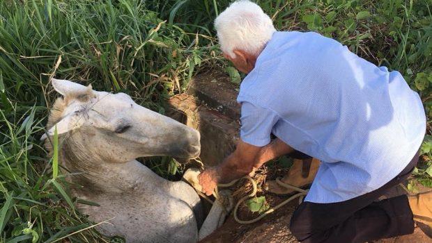 Bombeiros resgatam cavalo em bueiro com ajuda de moradores