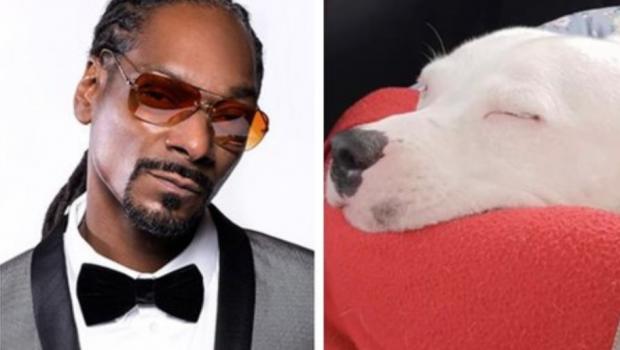 Snoop Dogg se oferece para adotar cachorro abandonado que viralizou na web
