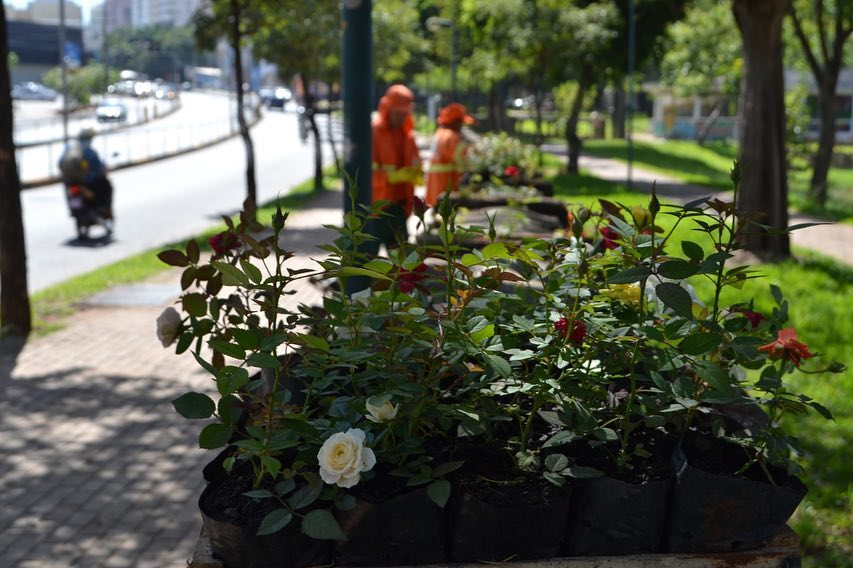 Vândalos furtaram, danificaram as floreiras e deixaram sujeira na calçada (Foto: Divulgação)