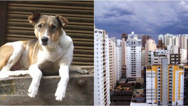 Adotar animais pode render isenção ou descontos em impostos municipais de Goiânia