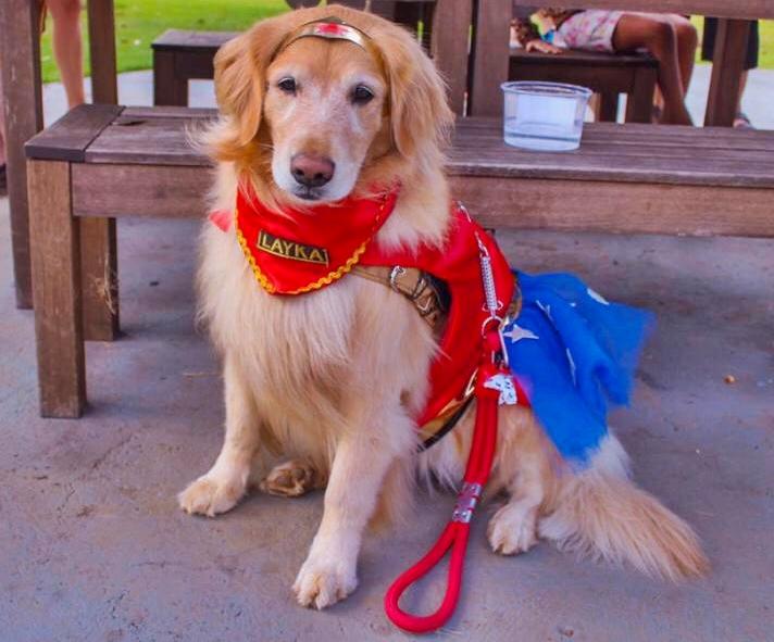 A cadela Layla fantasiada de Mulher Maravilha (Foto: Divulgação)