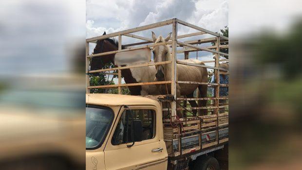 Adolescentes são apreendidos suspeitos de furtar cavalos de elite, em Luziânia