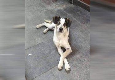 Hospital veterinário público em Osasco terá nome de cadela morta em supermercado