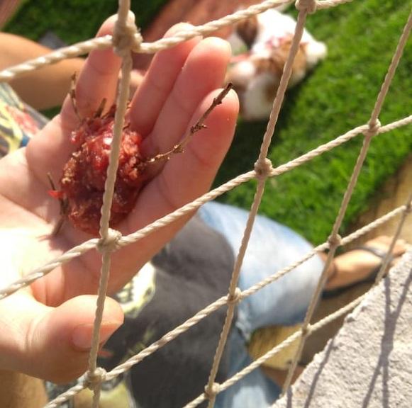 Carne envenenada foi espalhada na noite desta segunda-feira (18) e na manhã de terça-feira (19) (Foto: Reprodução/Whatsapp)