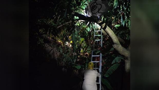 Homem sobe em árvore para podar galhos e morre eletrocutado em Jataí