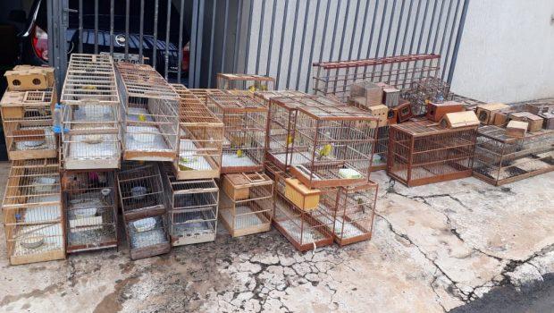 PM apreende 46 pássaros silvestres em Rio Verde