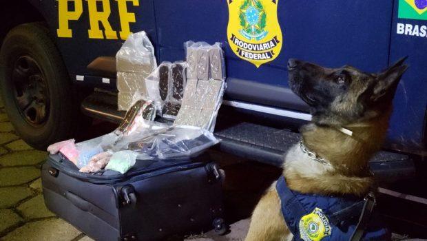Jovem que saiu da rodoviária de Goiânia com drogas é preso durante fiscalização em Brasília