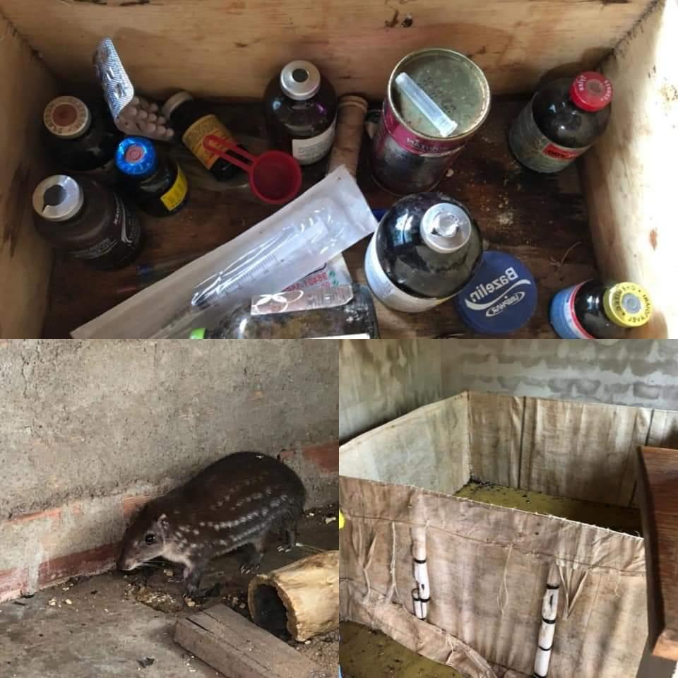 PM fecha rinha de galo, apreende animais e drogas em Porangatu