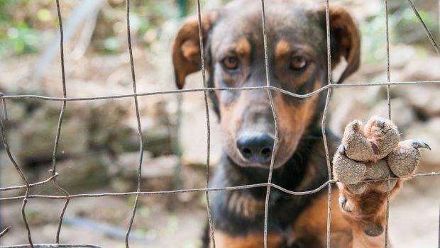 Vereadora de Goiânia propõe punição a quem omitir socorro a animais
