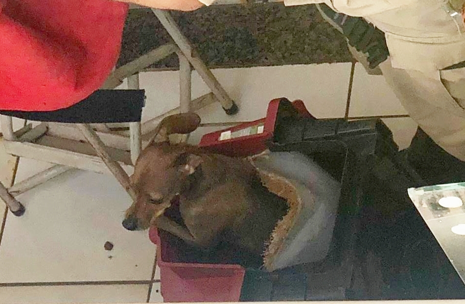 Cachorro é resgatado após ficar três dias preso em sacada de prédio, em Aparecida de Goiânia