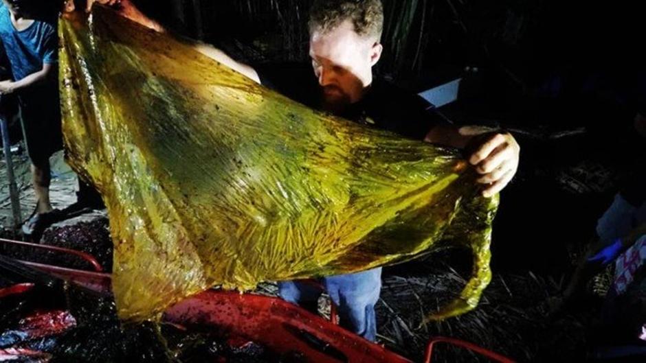 Baleia é encontrada morta nas Filipinas com 40 kg de plástico no estômago