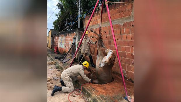 Bombeiros resgatam égua de fossa com três metros de profundidade em Águas Lindas