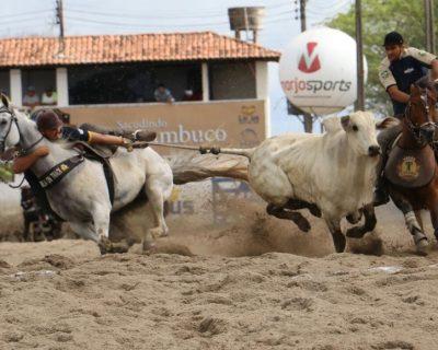 Vaquejada é considerada prática esportiva em Goiás e lei prevê multa em casos de maus tratos