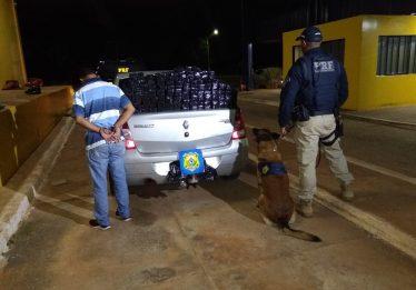 Com ajuda de cão farejador, PRF apreende 100kg de maconha em carro