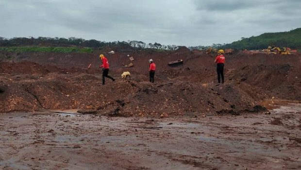 Bombeiros de Goiás retornam a Brumadinho e cães farejadores encontram corpos