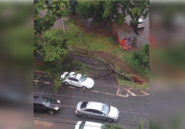Chuva forte deixa ruas alagadas, provoca queda de árvores e falta de energia em alguns bairros de Goiânia