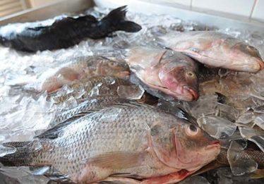Secretaria de Saúde alerta sobre compra de peixes