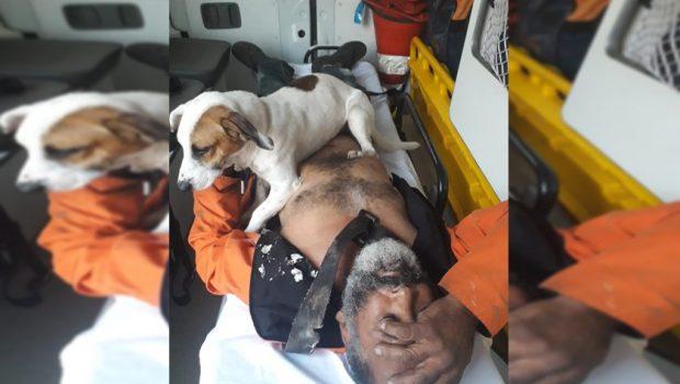 Cachorro não abandona dono atropelado durante socorro do Samu, no DF