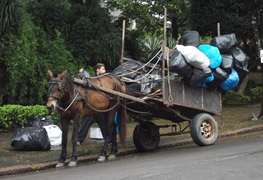 Vereadores querem derrubar veto de prefeito sobre PL que proíbe o uso de transporte com tração animal em Goiânia