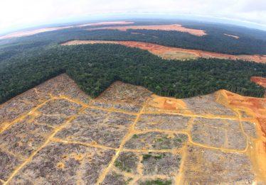 Agência de mineração autoriza garimpo em áreas protegidas