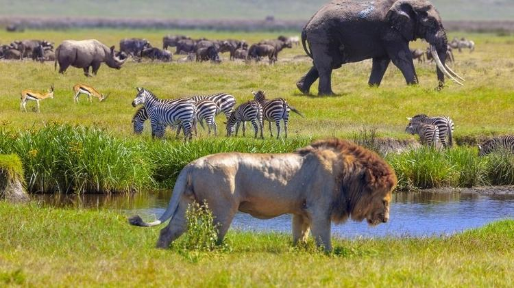 Relatório da ONU aponta 1 milhão de espécies ameaçadas de extinção no planeta