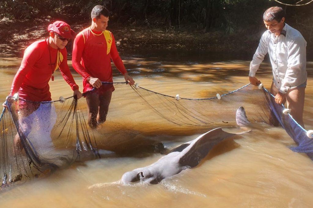 Corpo de Bombeiros resgata boto preso em poço e fazem a soltura no Rio Araguaia