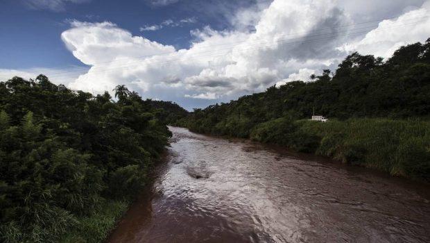 Testes mostram que lama de Brumadinho mata e deforma animais