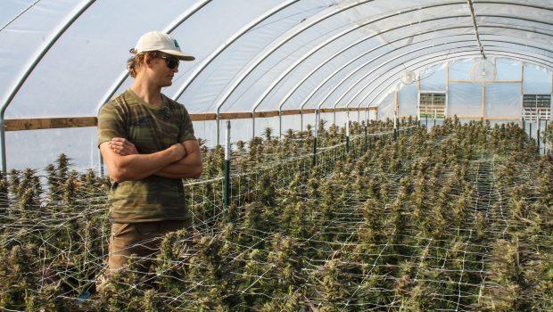 Anvisa dá primeiro passo para regular plantio de maconha no Brasil