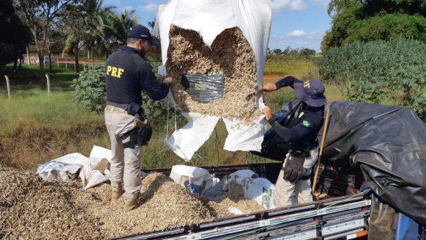Casal é preso ao transportar cerca de uma tonelada de maconha, em Jataí