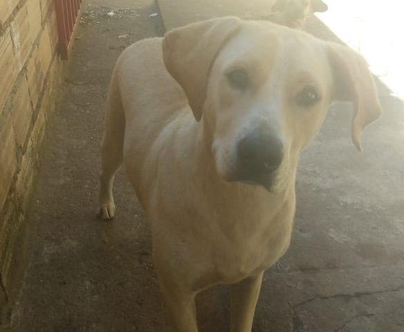 Candidato suspeito de estuprar cadela não pode ser preso durante campanha